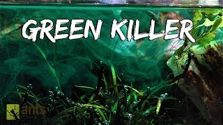 Download My Pets Were Killed by a Green Monster Video