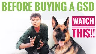Download Things you should know before buying a GERMAN SHEPHERD DOG || All About Pets Video