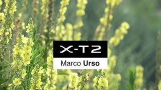 Download X-T2: Marco Urso (Italy) x Nature & Travel / FUJIFILM Video