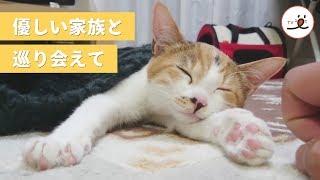 Download 事故に遭い足が動かなかった子猫。優しい家族に育てられ、奇跡がおきた✨【PECO TV】 Video