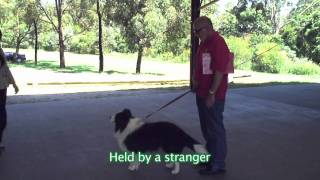 Download Delta Therapy Dogs - Dog Evaluation Procedures Video