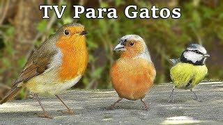 Download TV Para Gatos : Pájaros en Todas Partes Video