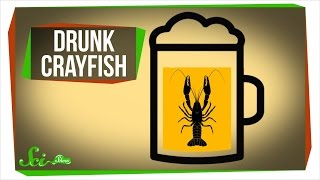 Download Getting Crayfish Drunk... For Science! Video