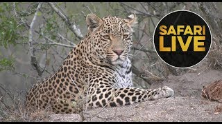 Download safariLIVE - Sunset Safari - August 23, 2018 Video