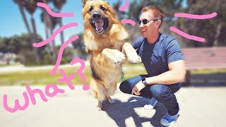 Download Homeless German Shepherd Dog Screams Like a Person When He Sees Ocean First Time! (Amazing Reaction) Video