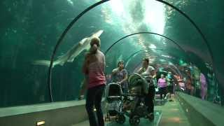 Download The Amazing Oregon Coast Aquarium! Video