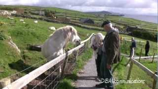 Download The Ring of Dingle - Ireland's Dingle Peninsula Video
