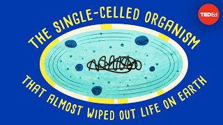 Download How a single-celled organism almost wiped out life on Earth - Anusuya Willis Video
