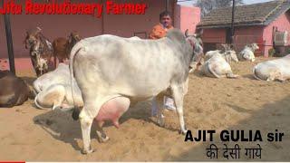 Download DESI COWS- Milk 20+Litre(A2Milk) -Gopalak AJIT GULIA Sir- District Jhajjhar, Haryana.. Video