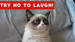 Download Try Not To Laugh At This Funny Cat Video Compilation | Funny Pet Videos Video