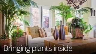 Download Bringing Plants Indoors For Winter Video