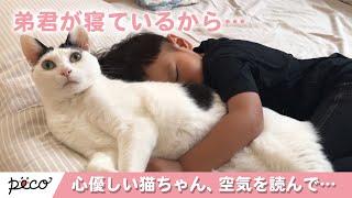 Download 空気を読んで…弟思いな心優しい猫ちゃん😽 【PECO TV】 Video