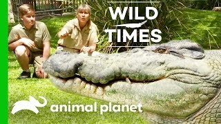 Download Our Old Friend the Crocodile   Wild Times Video