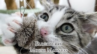 Download Elderberry Mouse Madness Video