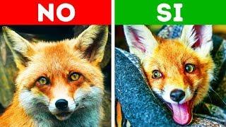 Download 10 animales exóticos que puedes tener fácilmente como mascotas Video