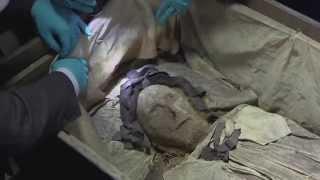 Download Experter undersöker en av nordens bäst bevarade mumier Video
