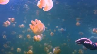 Download Jellyfish Lake, Rock Islands, Palau (GoPro HD2) Video