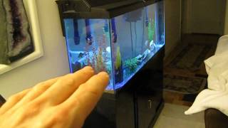 Download The easy way to breed Zebra Fish (Danios) - live footage Video