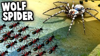 Download GIANT SPIDER vs Ant Colony! Wolf Spiders vs NEW ANT Species (Empires of the Undergrowth) Video