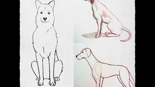 Download Cómo Dibujar un perro paso a paso PRINCIPIANTE (fácil y rápido) Video