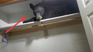 Download Montana Residents Awaken To Find A Furry Visitor In Their Closet! Video