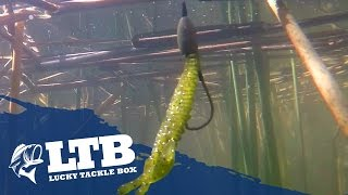 Download How to Fish for Spring Bass Video