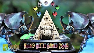 Download The Rhino Beetle Games | Epic Beetle Olympics Video