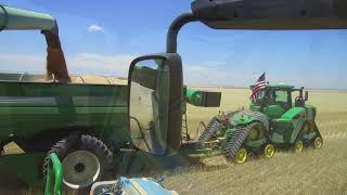 Download Kalcevic farms harvest 2018 with Walters Harvesting from Canada Video