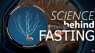 Download Does FASTING Boost Memory and Intelligence? Video