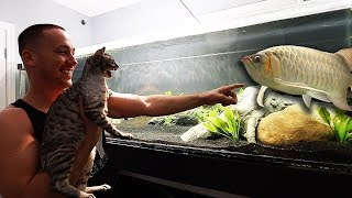 Download WILD CAT reacts to my AQUARIUMS!! Video