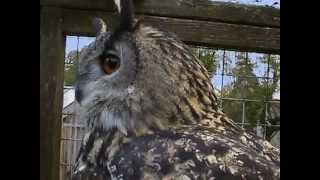 Download National Geographic Wildlife Wonders, Owls - The Silent Hunters Video