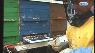Download Pčelinji otrov Bee venom Video