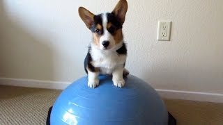 Download HEALTHY FITNESS PUPPY - Life After College: Ep. 328 Video