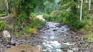 Download Impresionante como un río en Costa Rica crece por una cabeza de agua Video