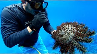 Download Spearfishing on TINY ultra REMOTE island!!! {Catch Clean Cook} Rota, CNMI Video