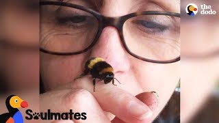 Download Bee and Woman Become Best Friends After Garden Rescue | The Dodo Soulmates Video