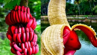 Download 15 World's Strangest Fruits Video