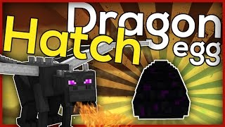 Download Minecraft: How to hatch a dragon egg! Video