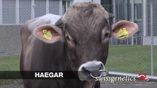 Download HAEGAR Video