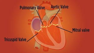 Download Heart Valve Disease in Women Video