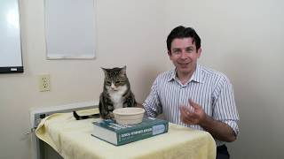 Download How to care for an older cat Part 2 of 3 Video