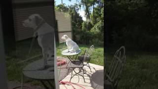 Download My rescue pup just recently started doing this when left outside Video