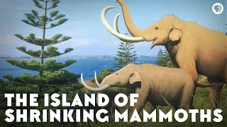 Download The Island of Shrinking Mammoths Video