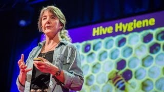 Download Marla Spivak: Why bees are disappearing Video