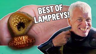 Download Best of Lampreys - River Monsters Video