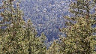 Download ¿Te imaginas un mundo sin bosques? Video