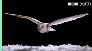 Download Experiment! How Does An Owl Fly So Silently? | Super Powered Owls | BBC Video