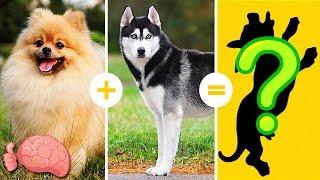 Download 20 Increíbles Cruzas De Razas De Perros Que NO CONOCÍAS Video
