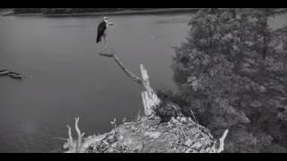 Download Bailey sees something and ducks - Rachel flies off 2017 07 24 19 51 20 284 Video