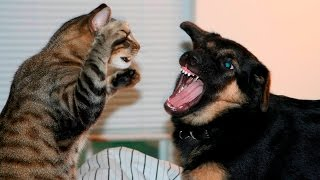 Download Funny Cats And Dogs Part 7 - Funny Cats vs Dogs - Funny Animals Compilation Video